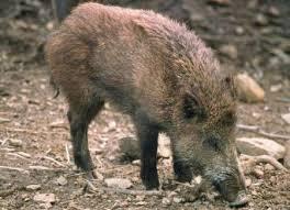 rimborso danni da fauna selvatica